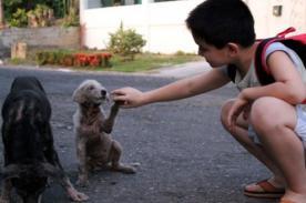 Padre descubre bello secreto de su hijo: Ayudar a perros callejeros - FOTOS
