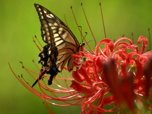 'Primavera' bello poema de Antonio Mallado