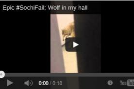 Sochi 2014: Lobo se pasea por las instalaciones de la Villa Olímpica – VIDEO