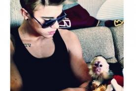 El mono de Justin Bieber se quedará en Alemania