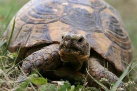 Conoce a la tortuga 'Luis Suárez' [Video]