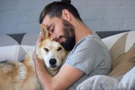 Los riesgos de tomar mascotas de la calle, entonces ¿Comprar o adoptar?: