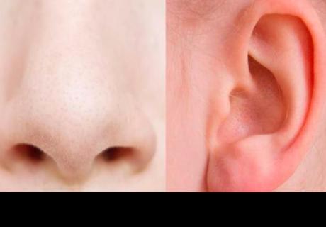 Esta es la razón por la que la nariz y las orejas nunca dejan de crecer