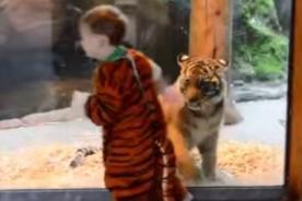 ¡Tierno! Niño disfrazado de tigre juega con felino - VIDEO