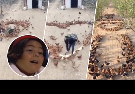 Granjero hace declaración de amor con animales y se vuelve viral en las red