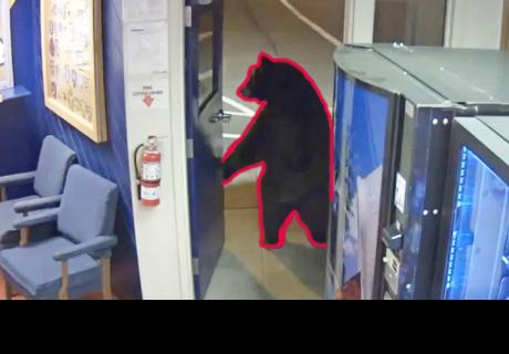 Oso en dos patas realiza una visita a una estación de policía