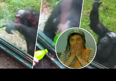 Mujer no podía darle fruta a mono y este tuvo ingeniosa solución