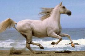 ¿Que predicciones tiene el horóscopo chino para el año del caballo 2014?