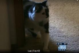Increíble: Gato secuestra a familia y policía intervino en rescate - VIDEO