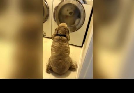 Perro se niega a abandonar a su peluche durante la hora de lavado