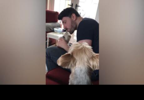 Perro gruñe de celos al ver a su dueño con otro can