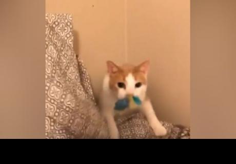 La singular forma que tiene un gato para recoger un juguete