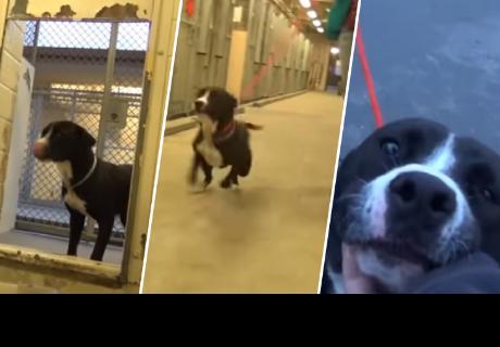 La reacción de este perrito al saber que será adoptado emocionó a todos  en la red