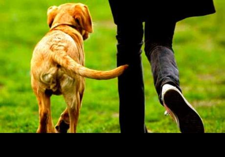 ¿Conoces bien a tu perro? Aprende a interpretar qué comunica al mover su cola (VIDEO)