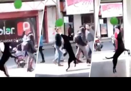 Perrito emociona a cibernautas al jugar con un globo en plena vía pública