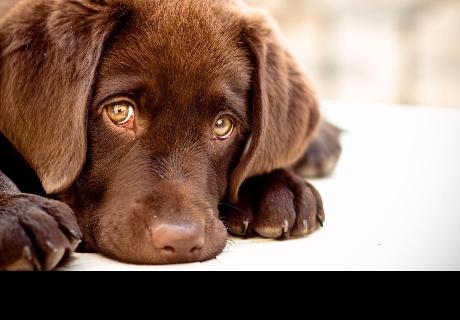 La gente hace esto a sus perros y los están poniendo en peligro de morir (VIDEO)