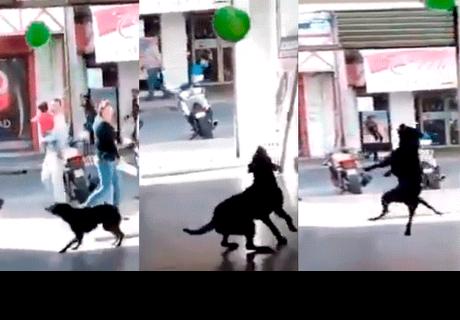 Perro callejero sorprende a muchos al 'dominar' un pequeño globo