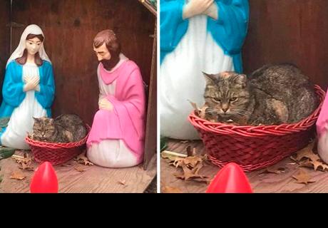 Navidad: Captan a gato gruñon en el pesebre