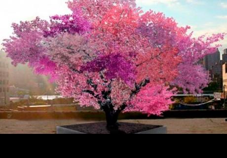 ¡Increíble! Inventan árbol que ofrece 40 tipos de frutas