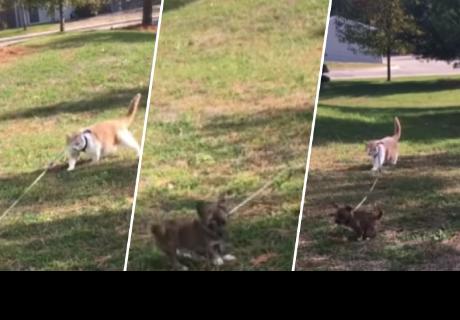 Gatito le enseña a perro cómo comportarse y llenan de ternura a cibernautas