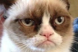 Meme Grumpy Cat será portada del New York Magazine