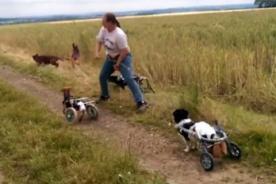 Perritos en sillas de ruedas juegan a atrapar la rama y conmueven en YouTube [Video]