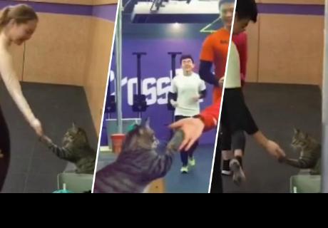Gato 'saluda' a todos en el gimnasio e impacta a más de uno en la red