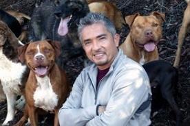 Feliz Cumpleaños César Millán: El 'Encantador de Perros' cumple 43 años