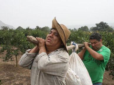 Manolo Rojas y Alfredo Benavides cargarán mandarinas en Vidas Extremas