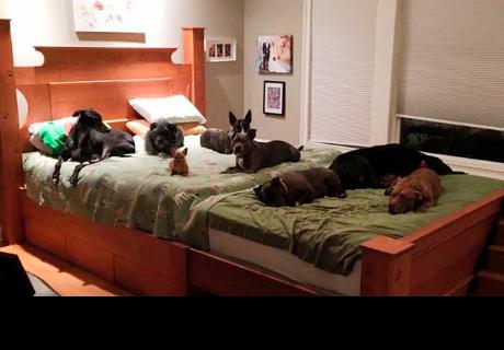 Pareja adoptó muchos perros que ahora necesitan una cama más grande