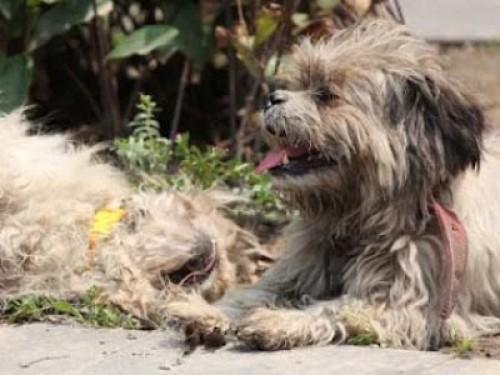 Fotos: Perro no abandonó a su pareja atropellada en la calle