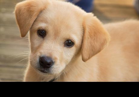 Acciones que detesta tu perro y no te das cuenta