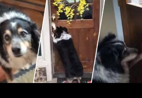 Perrito impacta a todos al demostrar que puede abrir y cerrar la puerta de su casa
