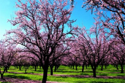 Poesías de primavera: El encantador 'Doña Primavera' de Gabriela Mistral