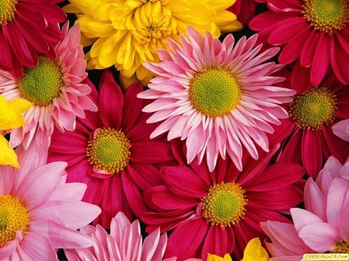 Primavera: Poesía a las flores en bellos sonetos