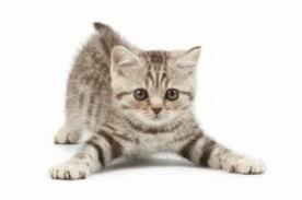 ¿Cuántos años humano tiene un gato? Estudio revela etapa de vida felina