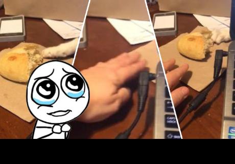 Gatito intentó 'robarle' un pedazo de pan a su dueño y esto pasó