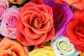 Primavera: Conoce el significado de las bellas rosas