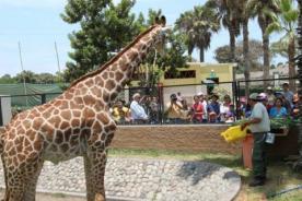 Zoológico 'El Parque de las Leyendas' cumple 50 años - Video