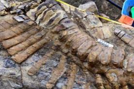 Hallan restos de dinosaurio que merodeó hace 66 millones de años