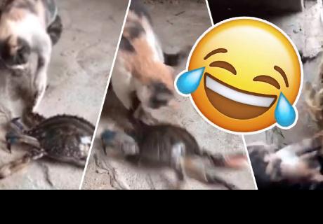 Así fue la reacción de 'travieso' gatito que tocó a un cangrejo