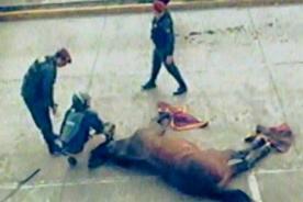 Video: Barristas de Alianza Lima mataron a un caballo de la Policía