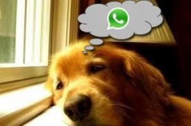 ¿Cómo sería una conversación con tu perro si tuviera Whatsapp? [FOTOS]