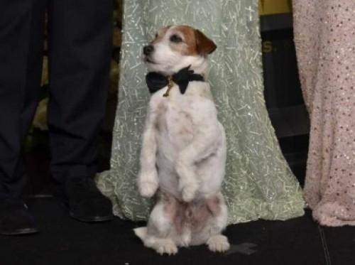Uggie, el perrito más famoso del cine, visitará a Barack Obama