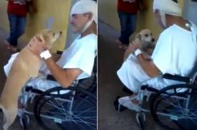 Brasil: Perro fiel espera afuera de un hospital a su dueño herido - Video