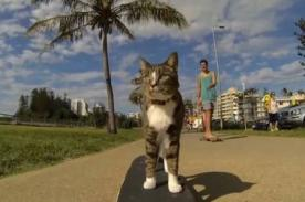 Viral: Didga, el gato 'skater' es un éxito en YouTube - VIDEO
