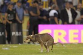 Liga Argentina: Perro dejó ´regalito' en la portería del cuadro local-VIDEO