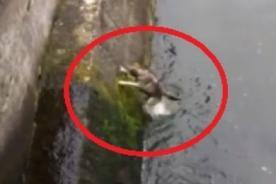 Rumania: Pescadores salvan a perro de un terrible final - Video