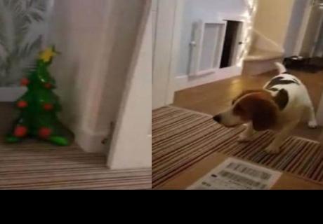 Perro tiene extraña reacción al ver un árbol de Navidad inflable