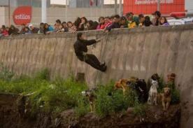 Arequipa: Hombre rescata a perros atrapados por la inundación